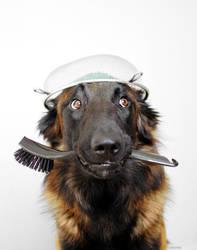 Kitchen Dog by Zolfyer