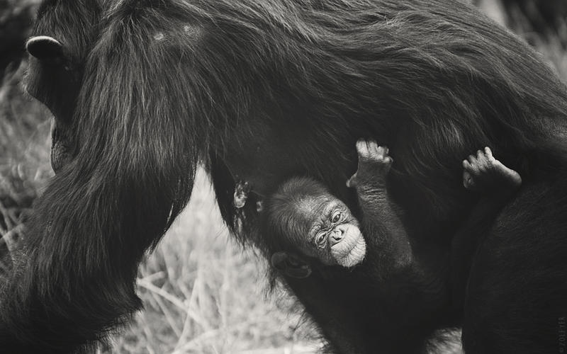 Motherly love by Zolfyer