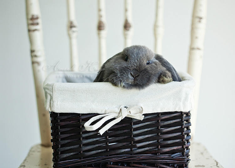 Chubby Bunny by kittynn