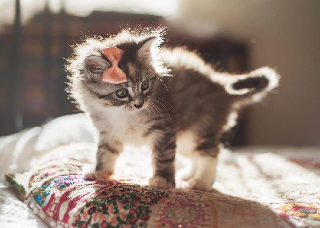 Little one by kittynn