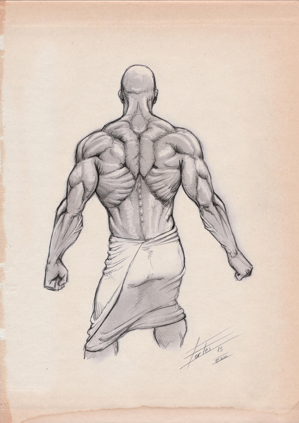 It is a photo of Simplicity Back Muscle Drawing