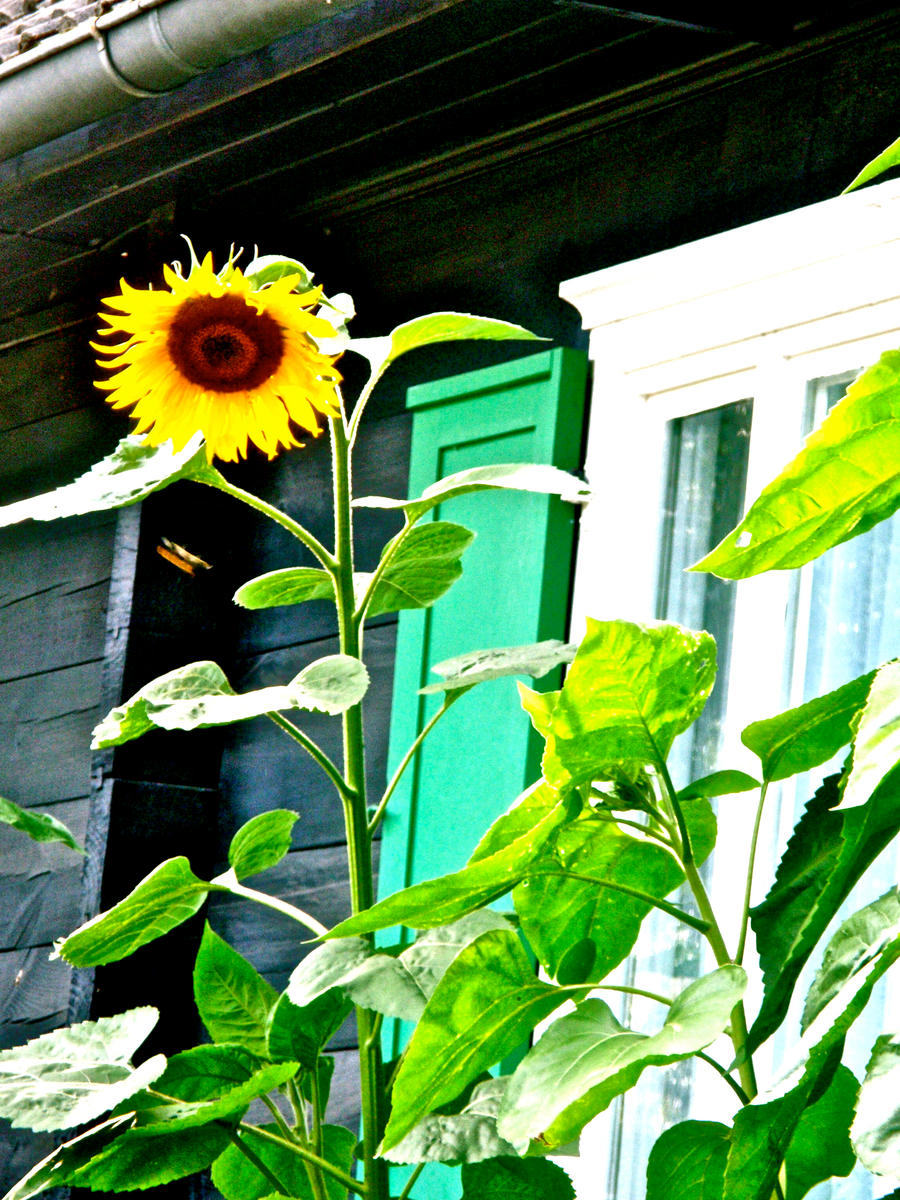 last summer sunshine by MidnightOfRain