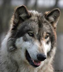 happy wolf by Yair-Leibovich
