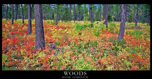 WOODS by Yair-Leibovich