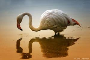 Dusk Flamingo by Yair-Leibovich