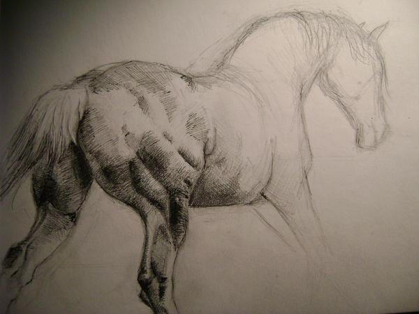 running horse by Olivsien