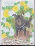 Moose the Chihuahua by RiverpaintTheArtist