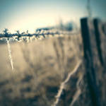 winters by martybell
