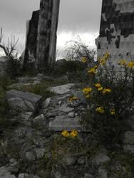 Flores amarillas by LautaroVincon