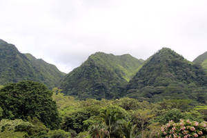 Tropical Mountains by Cynnalia-Stock