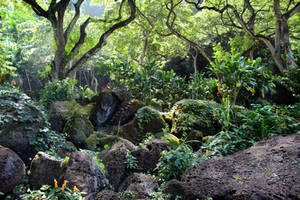 Jungle Rocks by Cynnalia-Stock