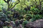 Jungle Rocks