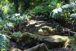Jungle Rocks 2