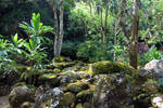 Jungle Rocks 3
