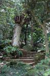 Jungle Stairs 2