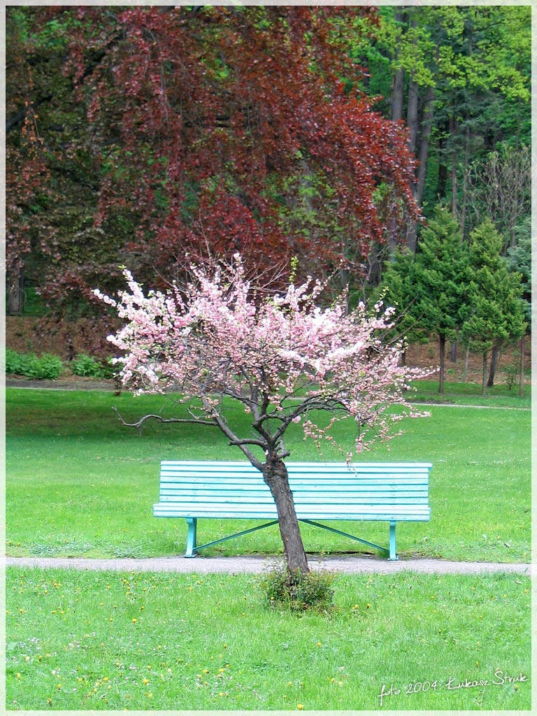 Small pink tree by iciatko on deviantart for Pink small tree