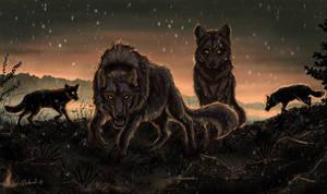 Dark Wolf Pack