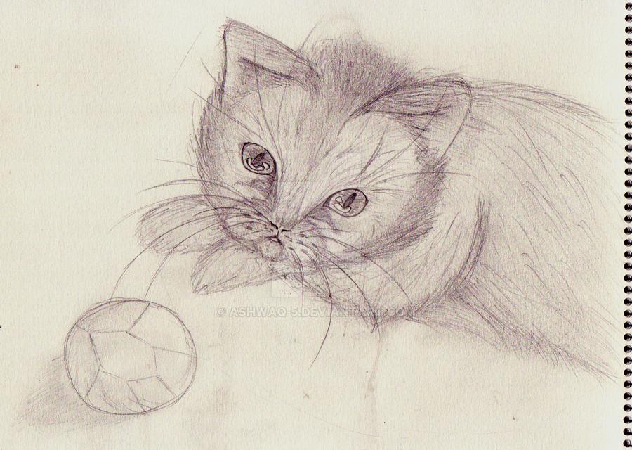cat by Ashwaq-5