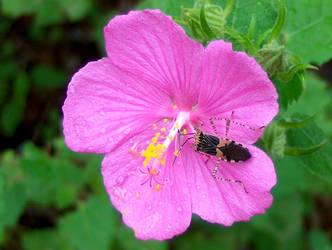 Bug on Flower by Jennifurret