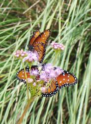 Orange Butterfly II by Jennifurret