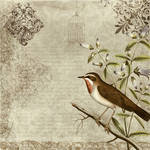 bird vintage texture