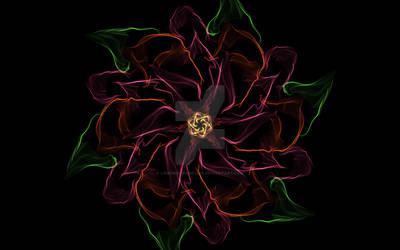 A Poinsettia