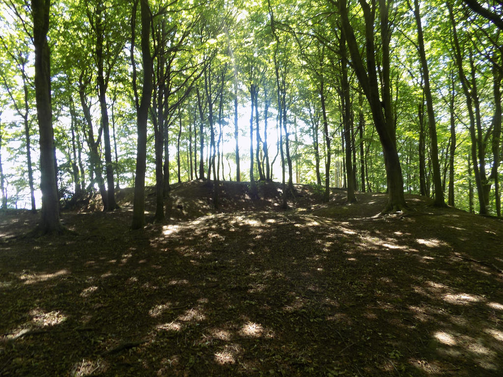 The woods. by Jakvia
