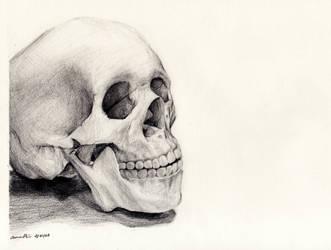 Skull by randomocity27