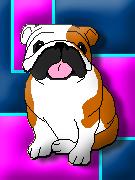 English Bulldog by SillyMigol