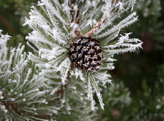 Hoar Frost by GreenEyezz