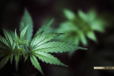 Marijuana by nazarow2008