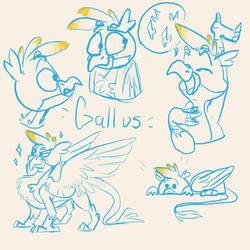 Gallus sketchs