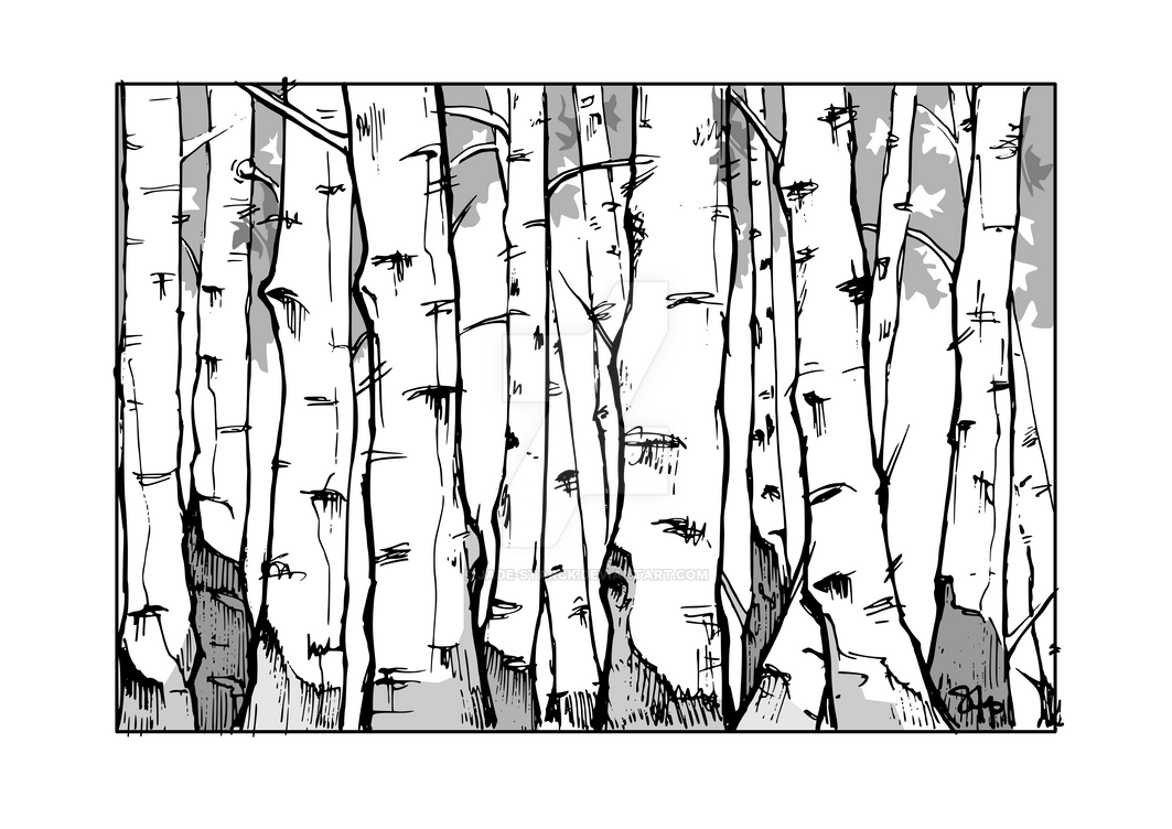 Birch by jade-starck