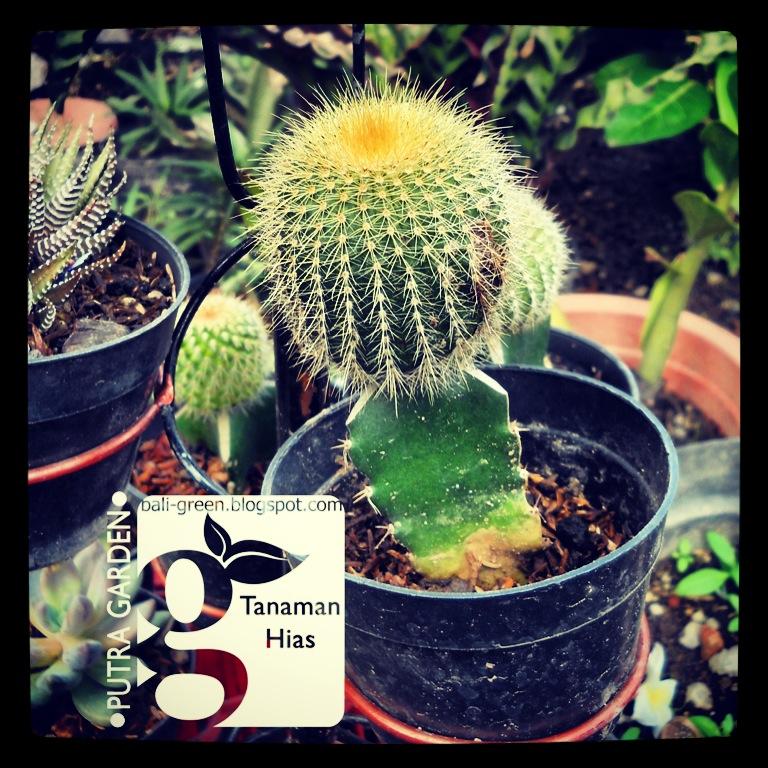 Tanaman Kaktus Mini Cactus House Plants By Gmanick On Deviantart