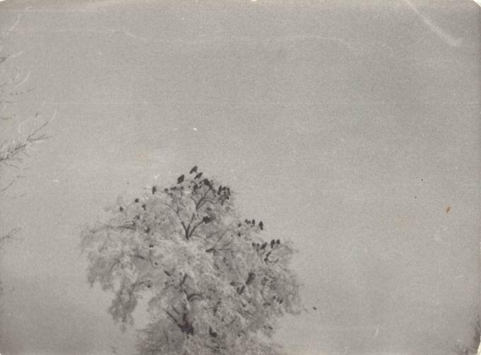 Winter Gathering+Crow Kinfolk