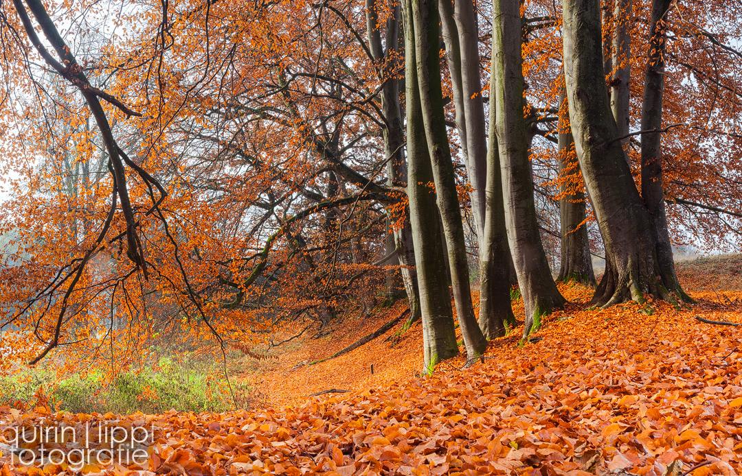Rain of leafes by quintz