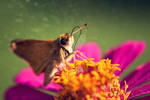 Butterfly by kat15057