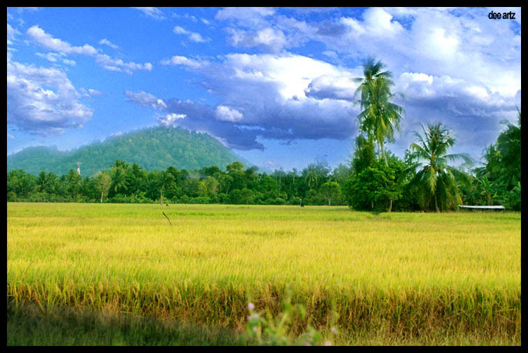 sawah padi by thecalling on deviantart