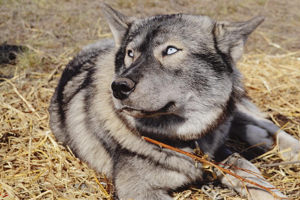 Dog by Teplyshko-chan
