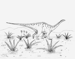 Antarctosaurus wichmannianus by briankroesch