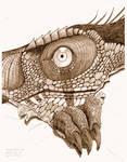 Achillobator giganticus peeks