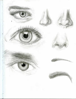 Eyes, Noses, and Eyebrows