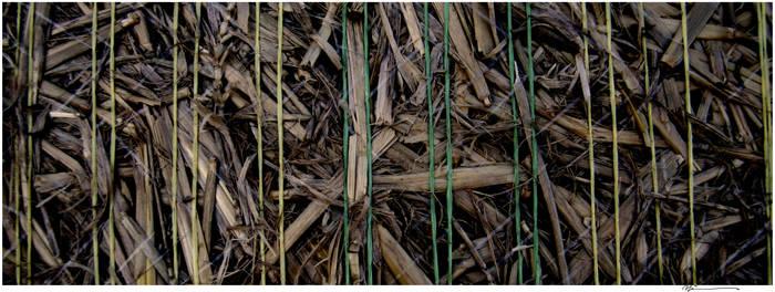Corns'left over by zapzoum