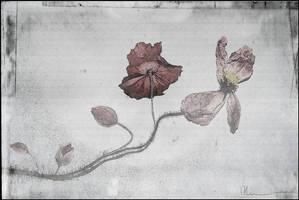 Naissance d'Une vieille Dame by zapzoum
