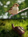 Sparrow and the Snail