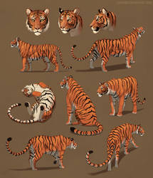 Tigers doing stuff and just hanging out