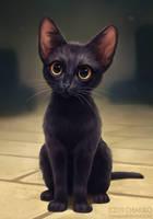 Street kitty by Chiakiro