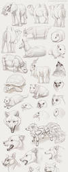 A bunch of animals by Chiakiro
