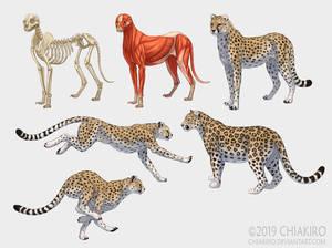 Cheetahs and a leopard