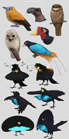 Birds and more critters
